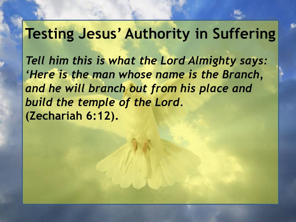 Testing Jesus' Authority in Suffering Tell him this is what the Lord Almighty says: 'Here is the man whose name is the Branch, and he will branch out from his place and build the temple of the Lord.