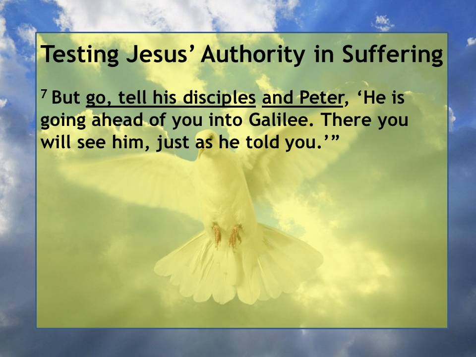 Testing Jesus' Authority in Suffering 7 But go, tell his disciples and Peter, 'He is going ahead of you into Galilee.