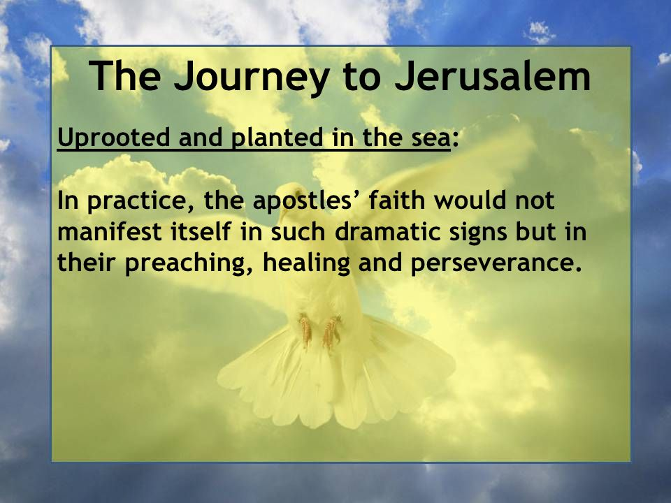 The Journey to Jerusalem Uprooted and planted in the sea: In practice, the apostles' faith would not manifest itself in such dramatic signs but in the