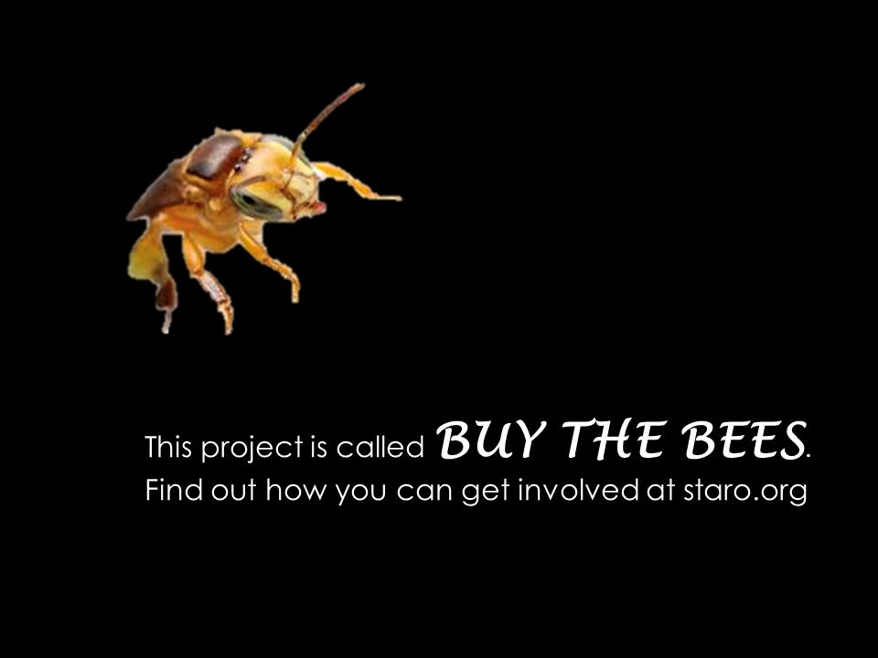 This project is called BUY THE BEES. Find out how you can get involved at staro.org