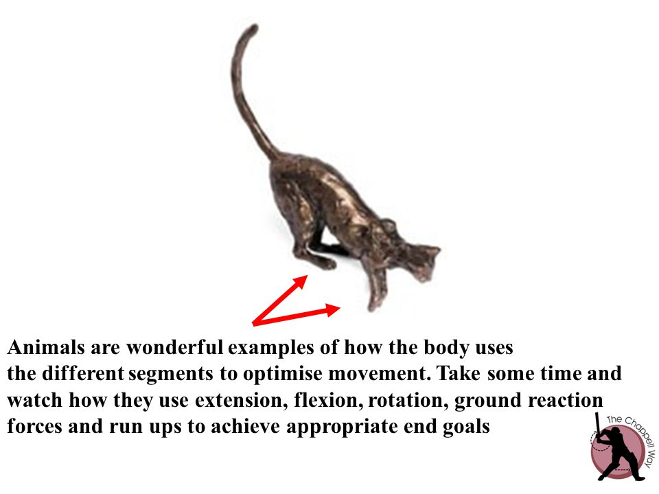 Animals are wonderful examples of how the body uses the different segments to optimise movement.