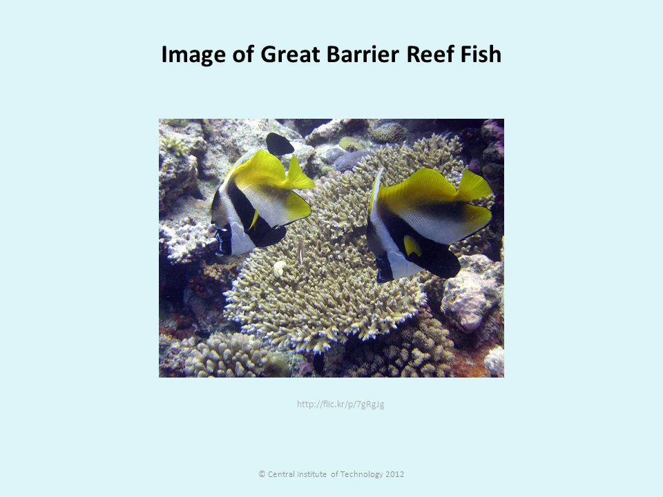 http://flic.kr/p/7gRgJg Image of Great Barrier Reef Fish