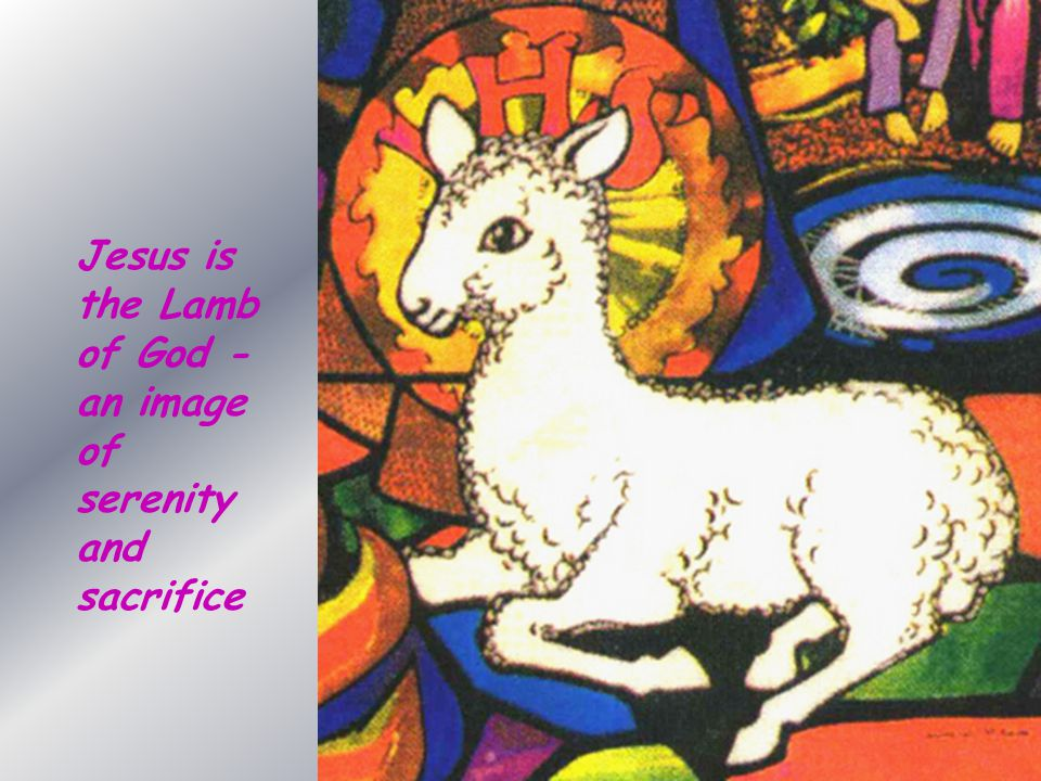 Jesus is the Lamb of God - an image of serenity and sacrifice