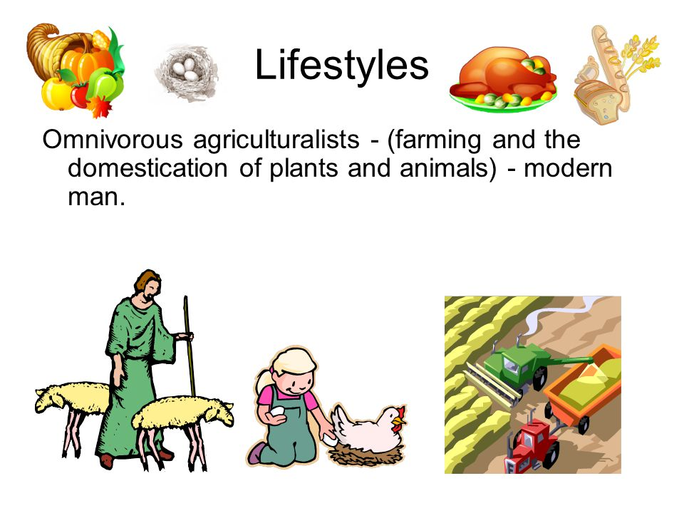 Lifestyles Omnivorous agriculturalists - (farming and the domestication of plants and animals) - modern man.