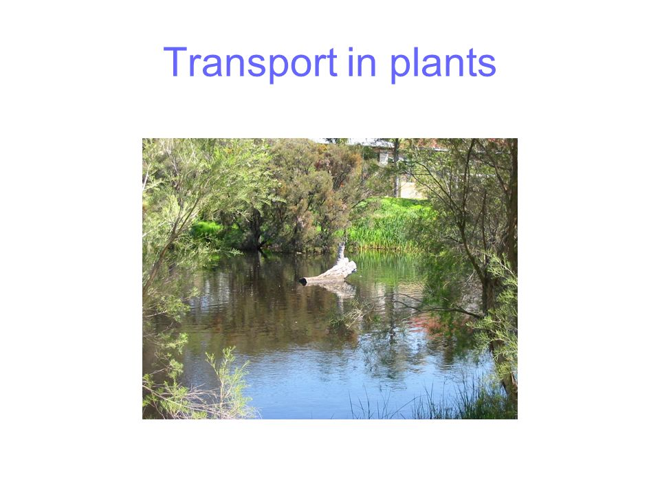 Arid region adaptations Water storage Reduced leaves Water storage - succulent leaves Water storage - trunk Reduced leaves – loses leaves in summer Long deep roots Reduced leaves Wide shallow root system