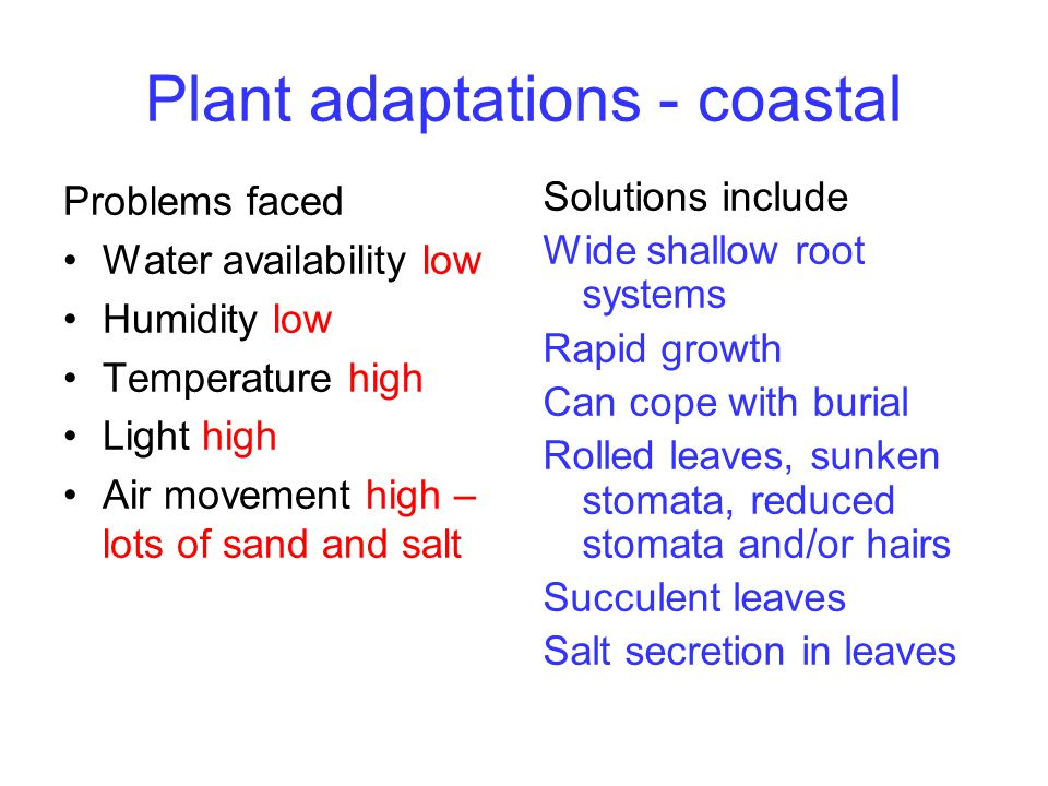 Plant adaptations - coastal Problems faced Water availability low Humidity low Temperature high Light high Air movement high – lots of sand and salt S