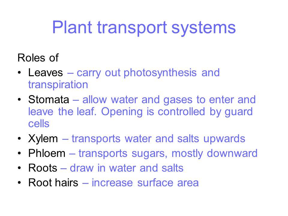 Leaf adaptations 2