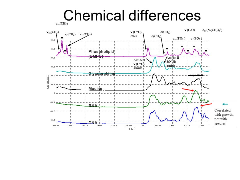 Chemical differences as (CH 3 ) s (CH 3 ) as (CH 2 ) (C=O) ester  (CH 3 )  (CH 2 ) as (PO 2 - ) (C-O) s (PO 2 - )  as (N-(CH 3 ) 3 + ) Amide I (C=O