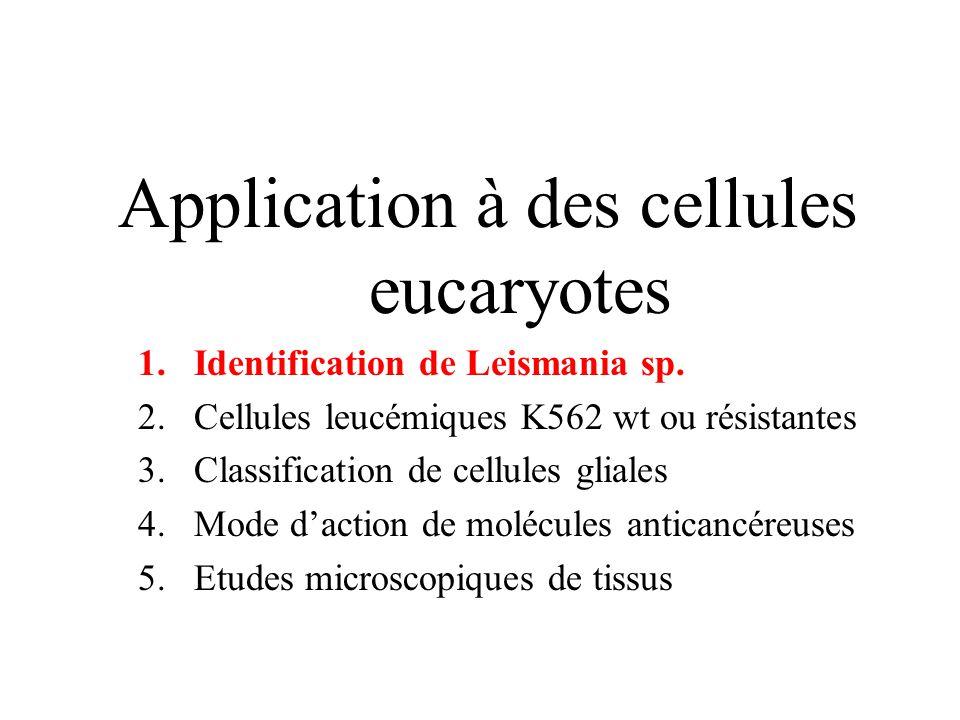 Application à des cellules eucaryotes 1.Identification de Leismania sp. 2.Cellules leucémiques K562 wt ou résistantes 3.Classification de cellules gli