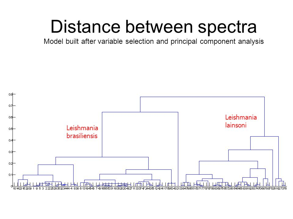 Distance between spectra Model built after variable selection and principal component analysis Leishmania lainsoni Leishmania brasiliensis
