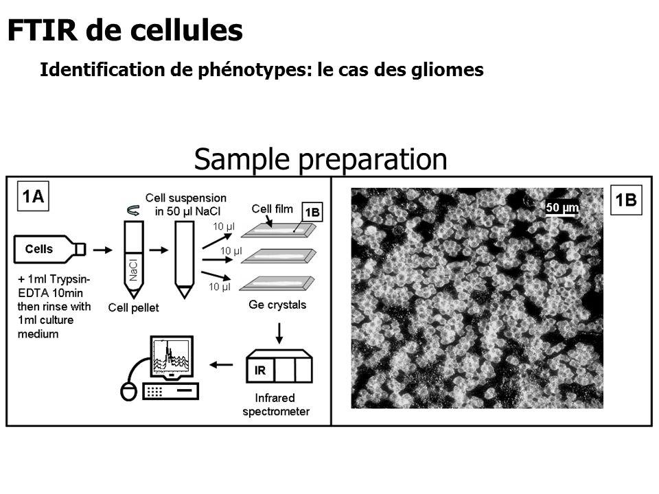 Sample preparation FTIR de cellules Identification de phénotypes: le cas des gliomes