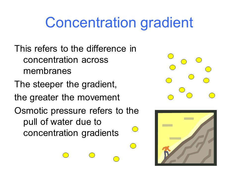 Concentration gradient This refers to the difference in concentration across membranes The steeper the gradient, the greater the movement Osmotic pressure refers to the pull of water due to concentration gradients