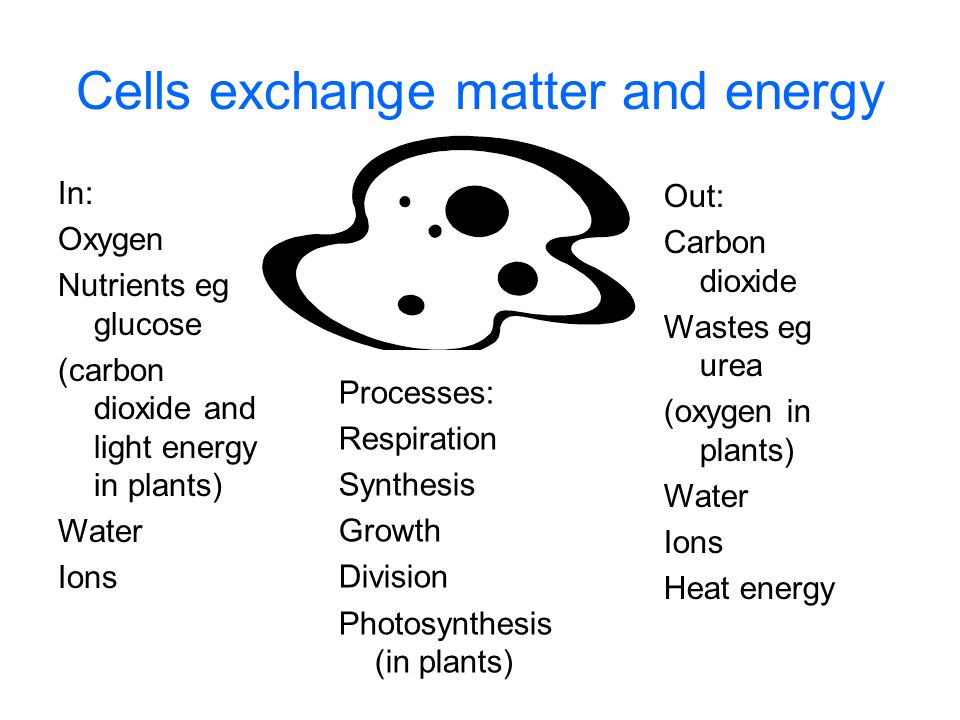 Cells exchange matter and energy In: Oxygen Nutrients eg glucose (carbon dioxide and light energy in plants) Water Ions Out: Carbon dioxide Wastes eg urea (oxygen in plants) Water Ions Heat energy Processes: Respiration Synthesis Growth Division Photosynthesis (in plants)