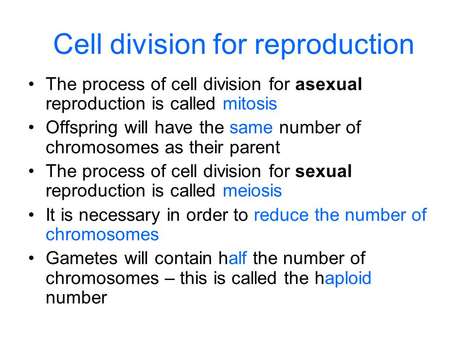 Cell division for reproduction The process of cell division for asexual reproduction is called mitosis Offspring will have the same number of chromosomes as their parent The process of cell division for sexual reproduction is called meiosis It is necessary in order to reduce the number of chromosomes Gametes will contain half the number of chromosomes – this is called the haploid number