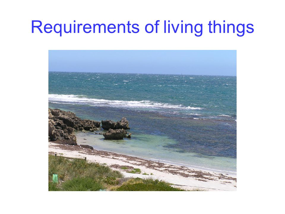 Requirements of living things