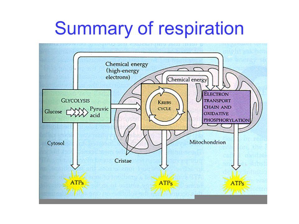 Summary of respiration
