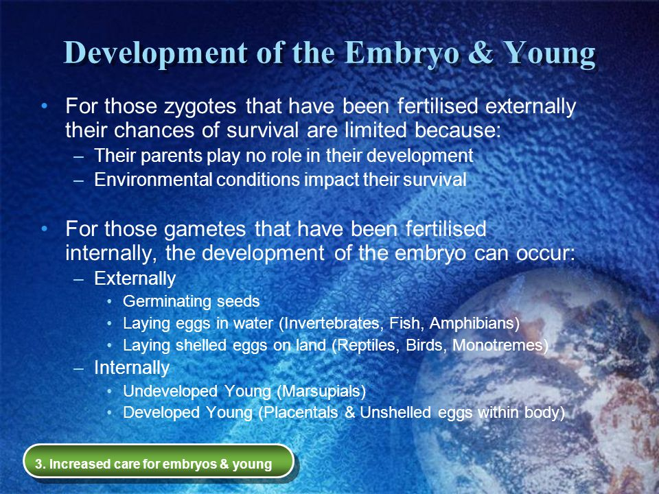 Development of the Embryo & Young For those zygotes that have been fertilised externally their chances of survival are limited because: –Their parents