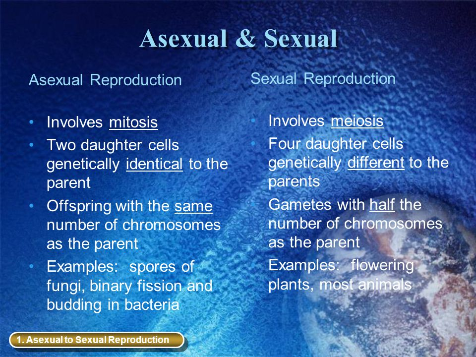Asexual & Sexual Asexual Reproduction Involves mitosis Two daughter cells genetically identical to the parent Offspring with the same number of chromo