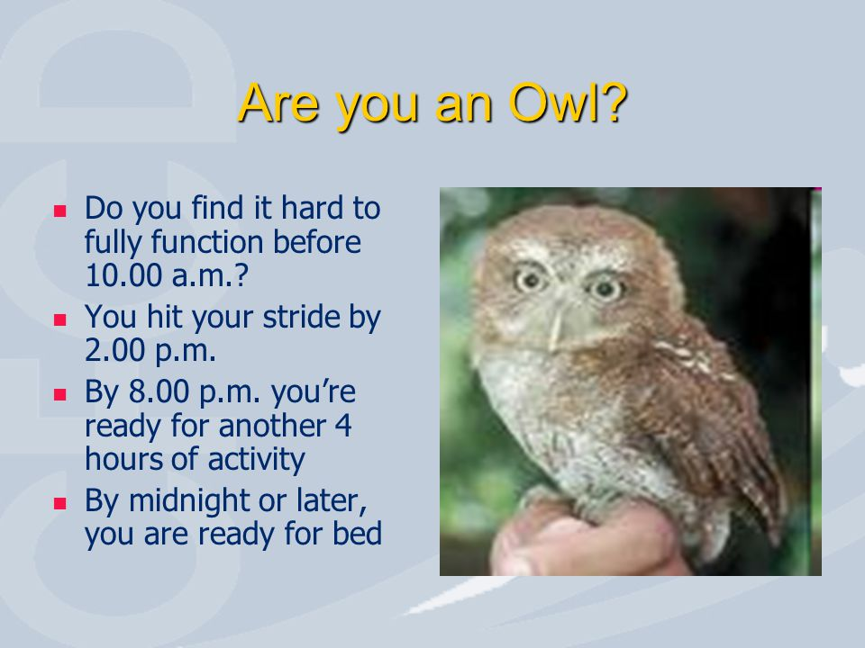 Are you an Owl? Do you find it hard to fully function before 10.00 a.m.? You hit your stride by 2.00 p.m. By 8.00 p.m. you're ready for another 4 hour