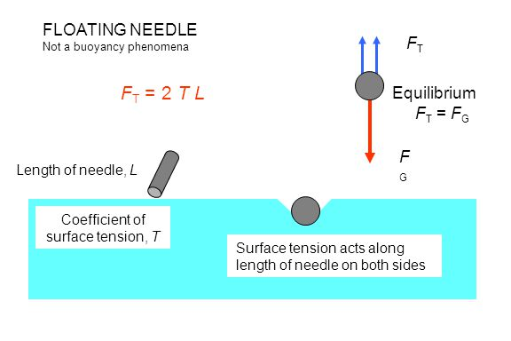 FLOATING NEEDLE Not a buoyancy phenomena FGFG FTFT Surface tension acts along length of needle on both sides Length of needle, L Equilibrium F T = F G