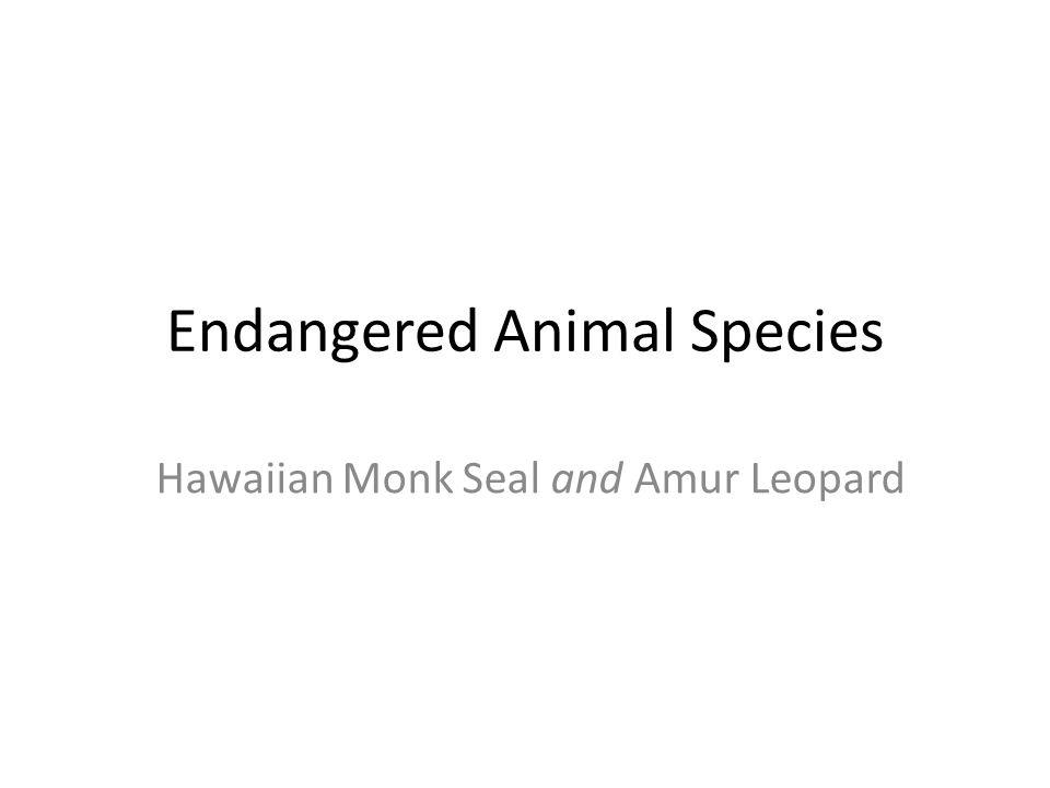 Endangered Animal Species Hawaiian Monk Seal and Amur Leopard