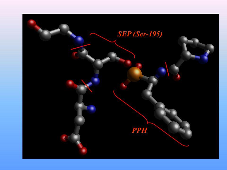 SEP (Ser-195) PPH