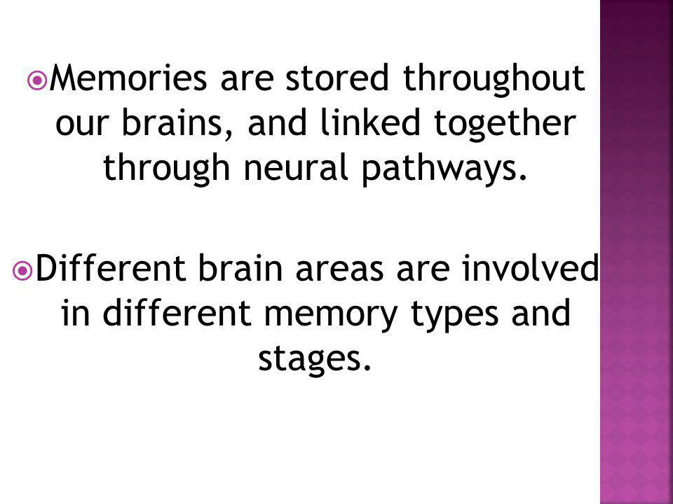  Memories are stored throughout our brains, and linked together through neural pathways.  Different brain areas are involved in different memory typ