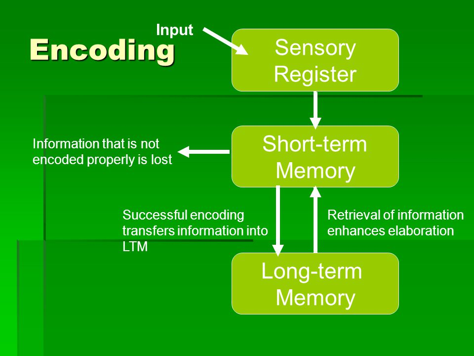 Encoding Sensory Register Short-term Memory Long-term Memory Input Information that is not encoded properly is lost Successful encoding transfers info