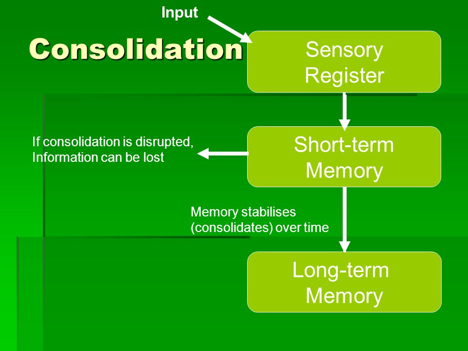 Consolidation Sensory Register Short-term Memory Long-term Memory Input If consolidation is disrupted, Information can be lost Memory stabilises (cons