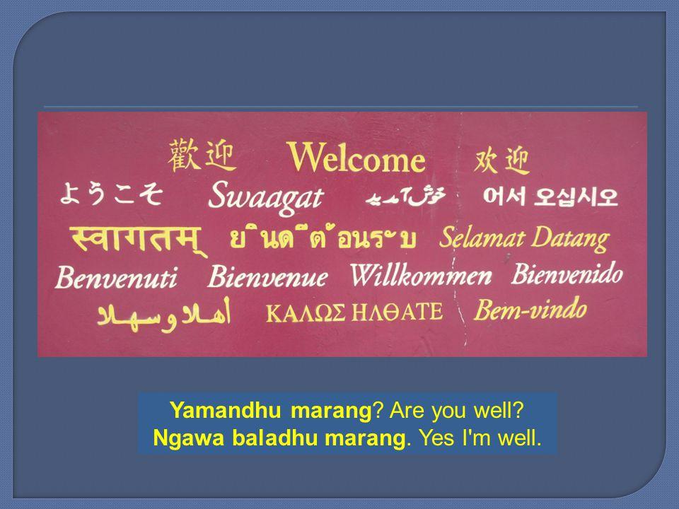 Yamandhu marang Are you well Ngawa baladhu marang. Yes I m well.