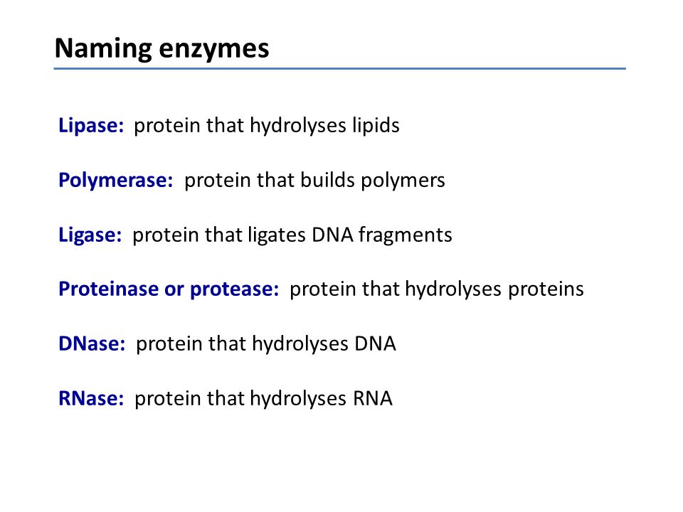 Lipase: protein that hydrolyses lipids Polymerase: protein that builds polymers Ligase: protein that ligates DNA fragments Proteinase or protease: pro