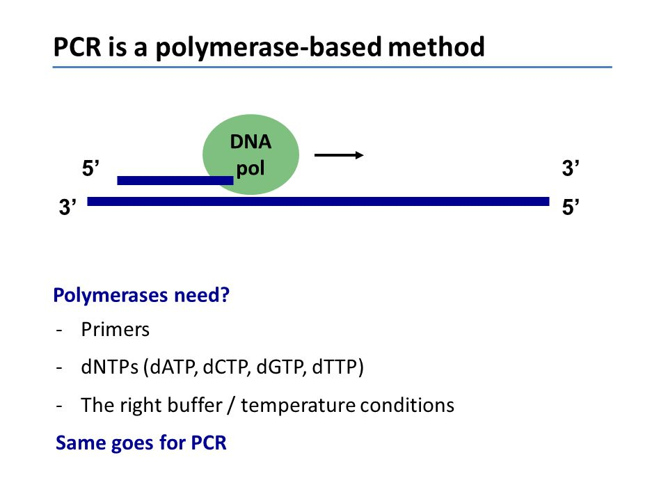 PCR is a polymerase-based method Polymerases need? DNA pol 3'3'5'5' 5'5'3'3' -Primers -dNTPs (dATP, dCTP, dGTP, dTTP) -The right buffer / temperature
