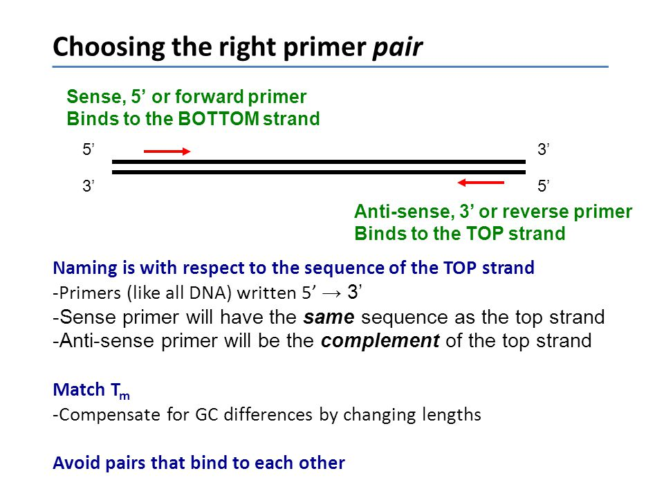 Choosing the right primer pair Naming is with respect to the sequence of the TOP strand -Primers (like all DNA) written 5' → 3' -Sense primer will hav