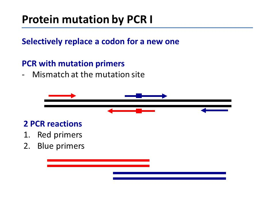 Protein mutation by PCR I Selectively replace a codon for a new one PCR with mutation primers -Mismatch at the mutation site z 2 PCR reactions 1.Red p