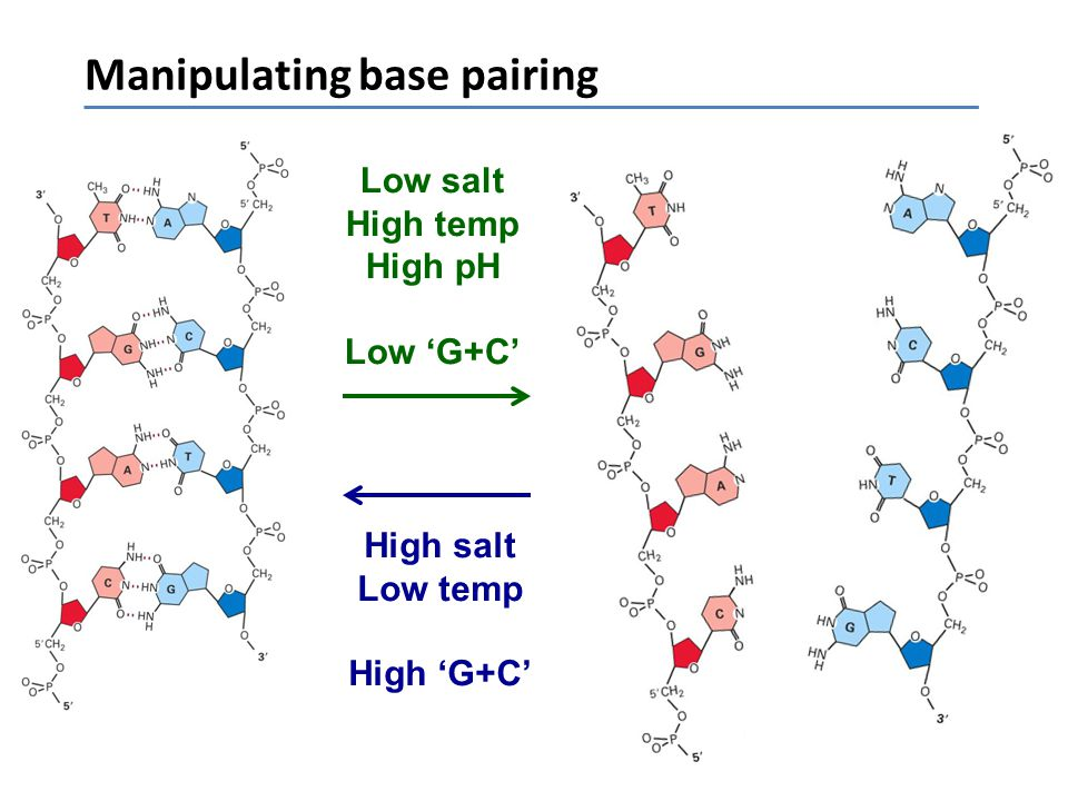 Manipulating base pairing Low salt High temp High pH Low 'G+C' High salt Low temp High 'G+C'