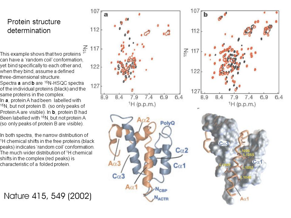 Protein structure determination This example shows that two proteins can have a 'random coil' conformation, yet bind specifically to each other and, when they bind, assume a defined three-dimensional structure.