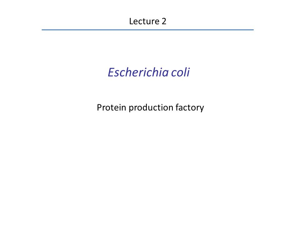 E.coli can divide no faster than once per 20 min.