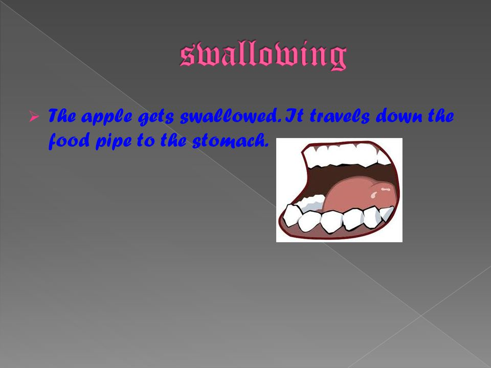 The apple gets swallowed. It travels down the food pipe to the stomach.