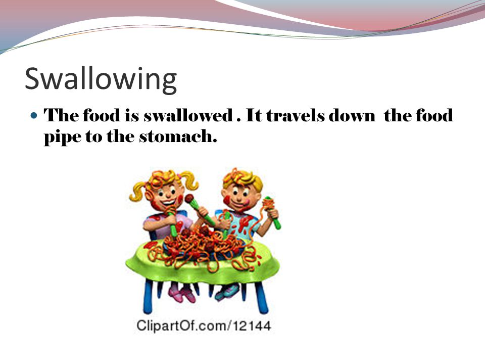 Swallowing The food is swallowed. It travels down the food pipe to the stomach.