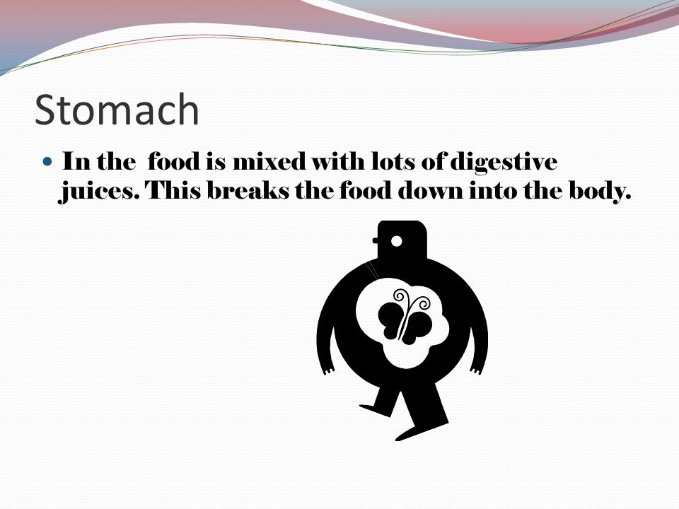 Stomach In the food is mixed with lots of digestive juices.
