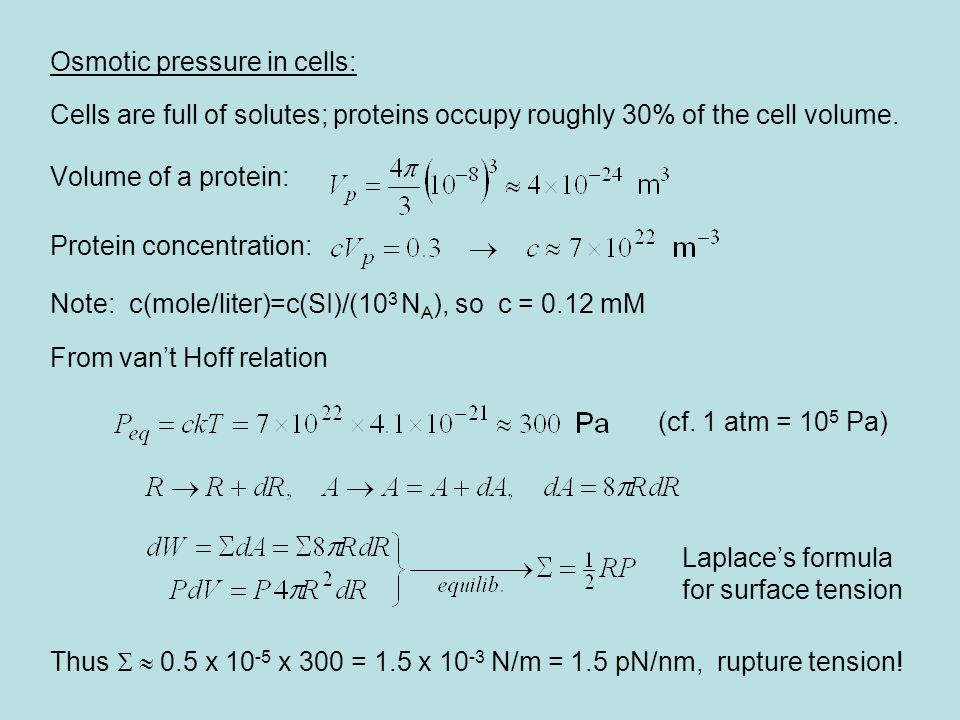 Osmotic pressure in cells: Cells are full of solutes; proteins occupy roughly 30% of the cell volume.
