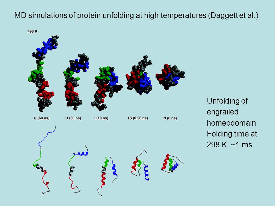 MD simulations of protein unfolding at high temperatures (Daggett et al.) Unfolding of engrailed homeodomain Folding time at 298 K, ~1 ms