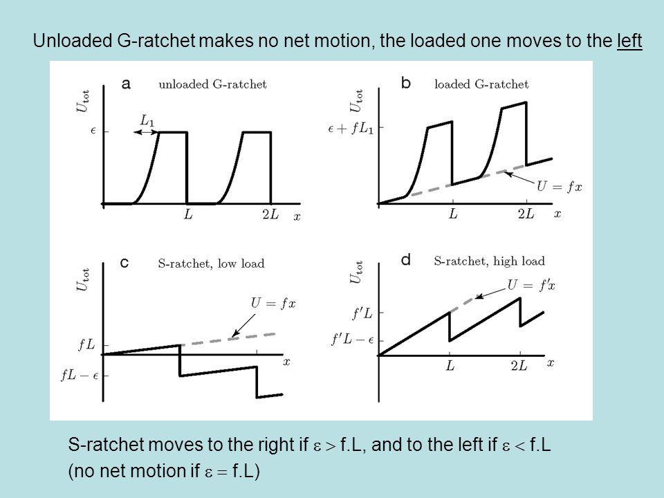 Simple model for a perfect Brownian ratchet: (  kT) In the absence of any forces, the ratchet diffuses freely until it travels a distance L.