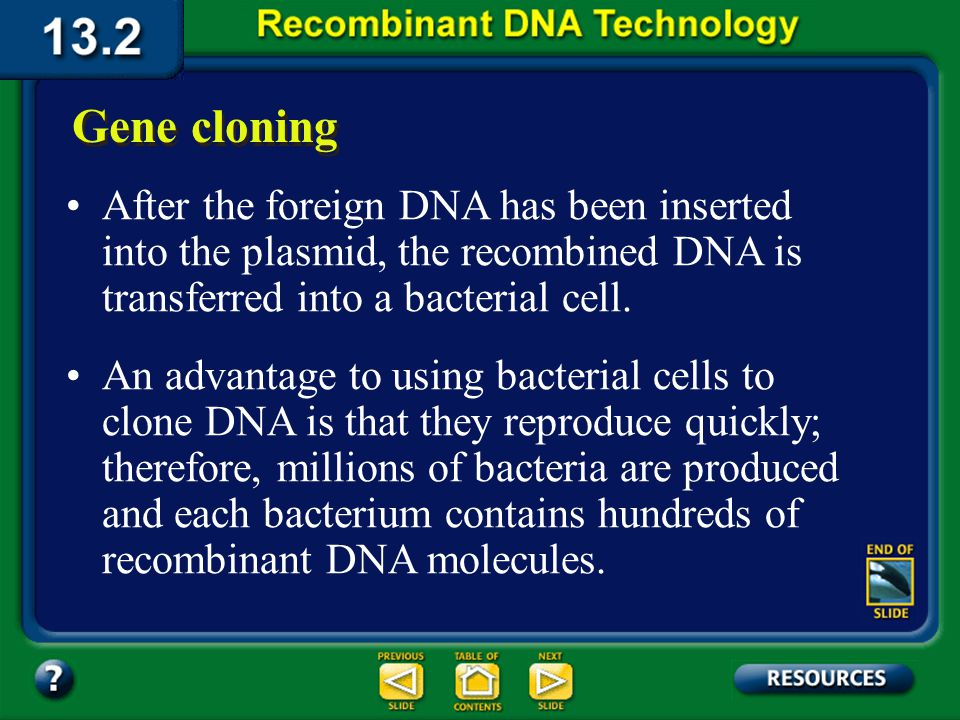 Section 13.2 Summary – pages 341 - 348 Insertion into a vector If a plasmid and foreign DNA have been cleaved with the same restriction enzyme, the ends of each will match and they will join together, reconnecting the plasmid ring.