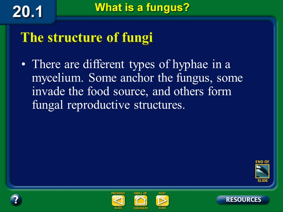 Section 20.1 Summary – pages 529-534 The structure of fungi Spore Germinating Spore Food Source Mycelium