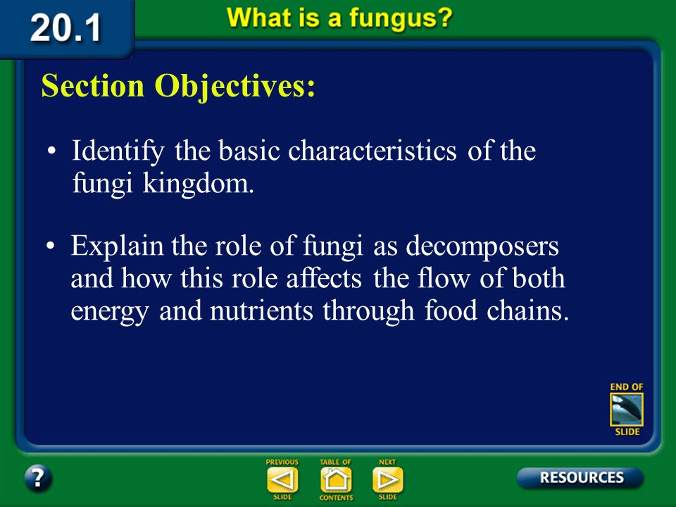 Chapter Intro-page 528 What You'll Learn You will identify the characteristics of the fungi kingdom. You will differentiate among the phyla of fungi.