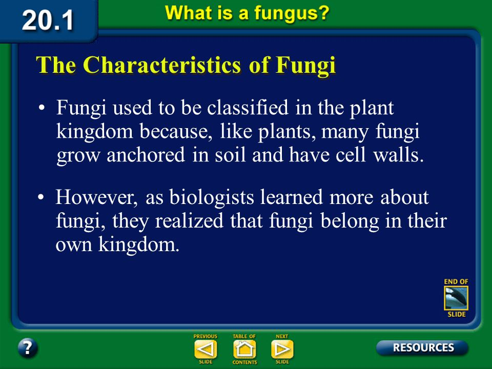 Section 20.1 Summary – pages 529-534 Some fungi are large, bright, and colorful, whereas others are easily overlooked. The Characteristics of Fungi Ma