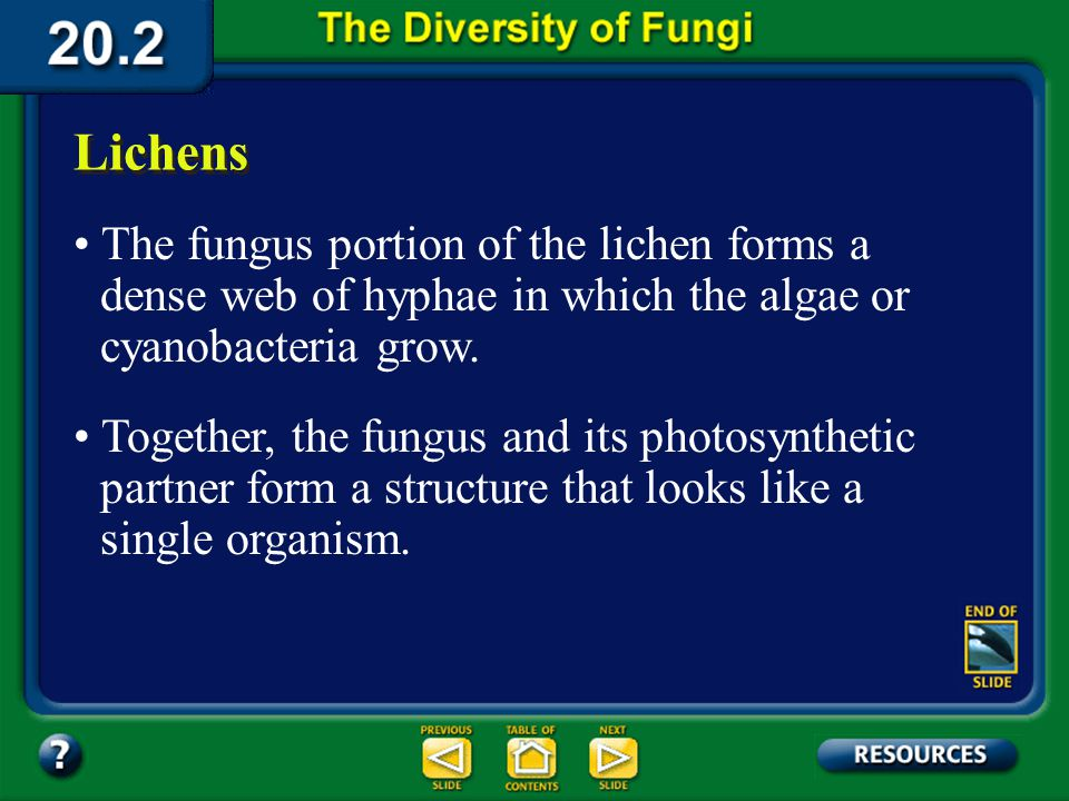 Section 20.2 Summary – pages 535-543 Lichens A lichen (LI kun) is a symbiotic association between a fungus, usually an ascomycote, and a photosyntheti