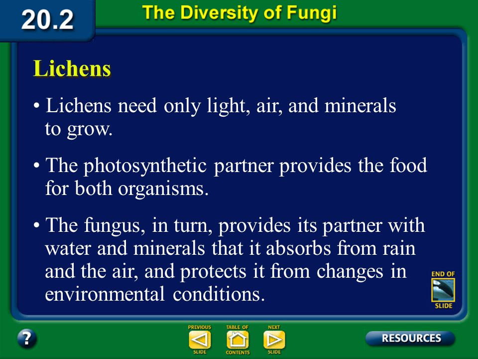 Section 20.2 Summary – pages 535-543 Lichens The fungus portion of the lichen forms a dense web of hyphae in which the algae or cyanobacteria grow. To