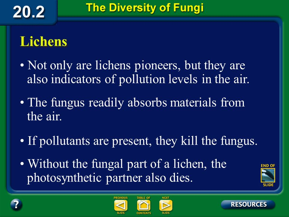 Section 20.2 Summary – pages 535-543 Lichens There are about 20,000 species of lichens. Found worldwide, lichens are pioneers, being among the first t